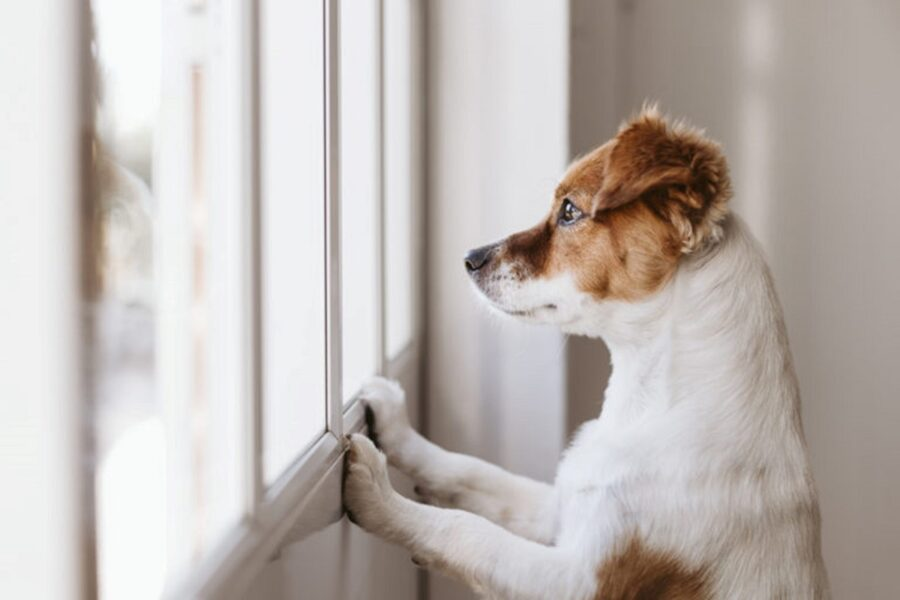 cane poggiato sul davanzale della finestra
