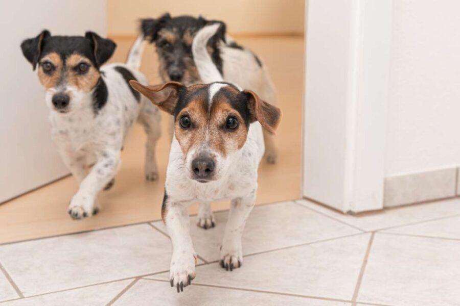 cuccioli di cane disobbedienti