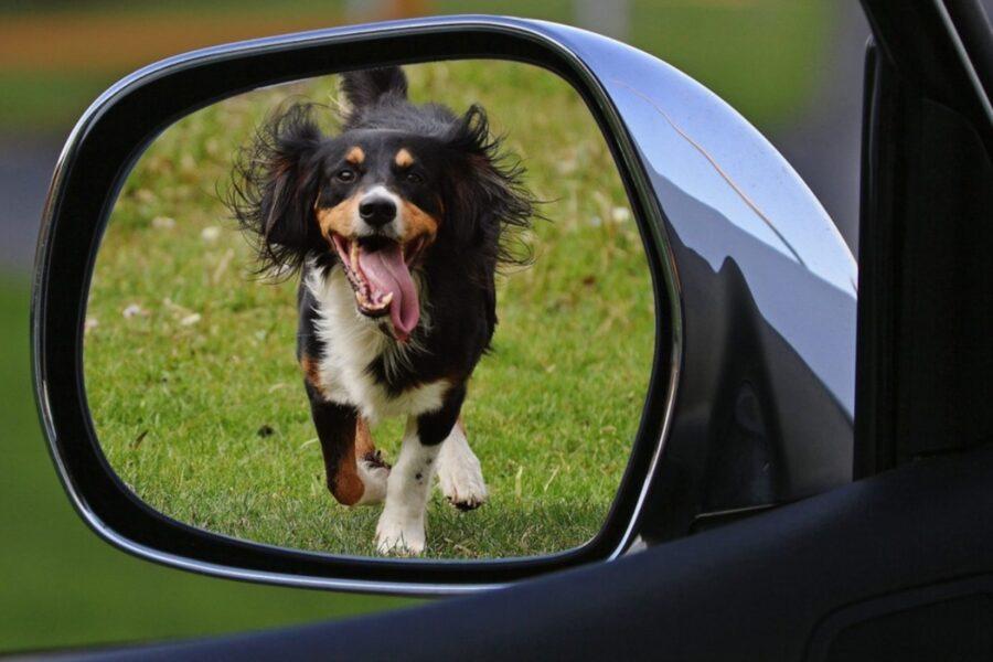 cane riflesso nello specchietto retrovisore