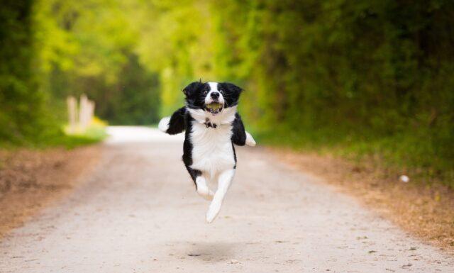 cane corre per la strada