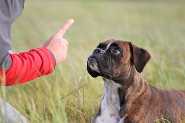 cane sul campo