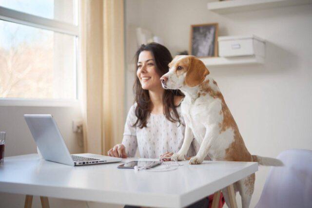 Cane sulla scrivania