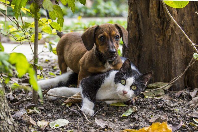 cane sopra gatto in un giardino