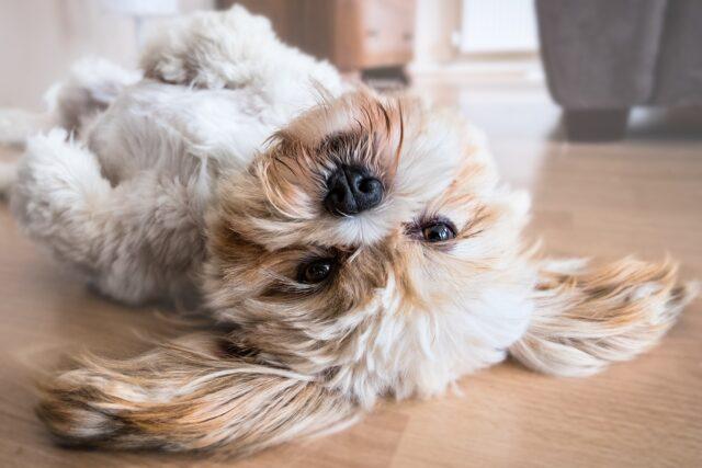 cane sottosopra per terra