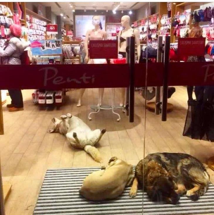 istanbul-cani-negozio