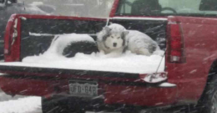 la-foto-del-cane-sul-pick-up-mentre-nevica-scatena-la-reazione-del-web