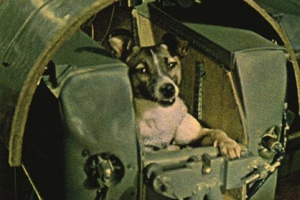 cane capsula spazio