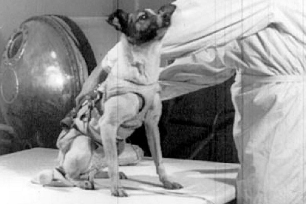 cane astronauta in preparazione