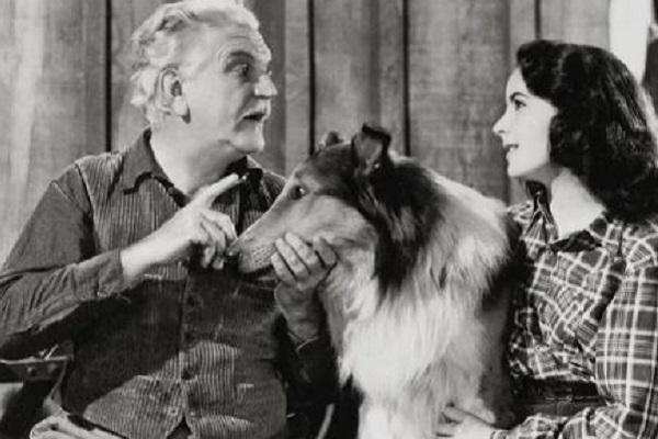 Ricordate Lassie? Ecco tutta la verità sulla storia del cane attore