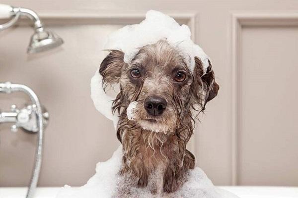 cane nella vasca da bagno