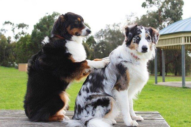Il cane gioca o si fa male? Ecco come capirlo