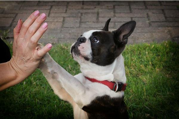 cani capiscono il carattere degli umani