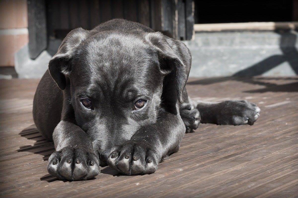 10 modi per aiutare il cane a fare amicizia