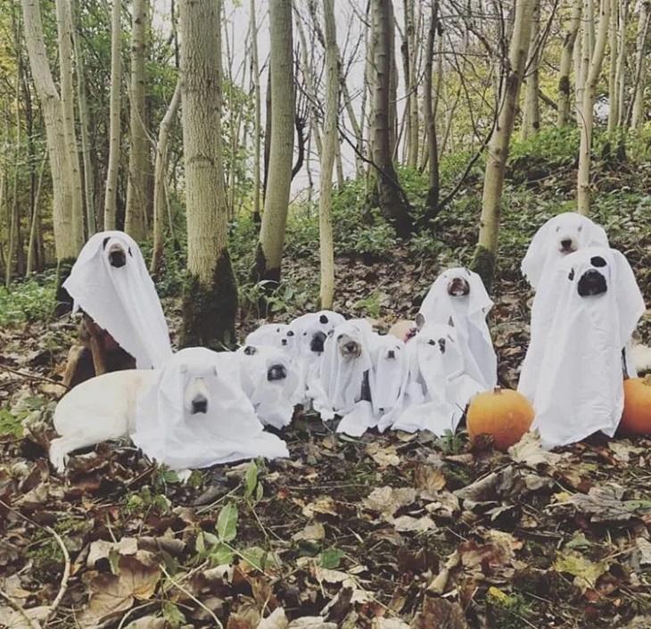mylittledoghouse-halloween