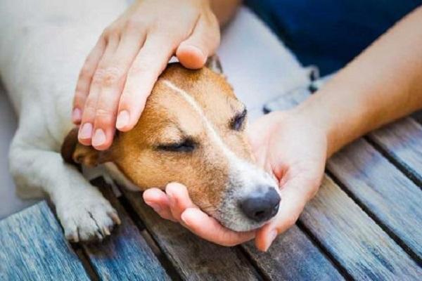 cane che non si sente bene