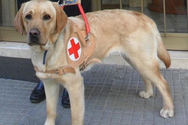 cane per assistenza
