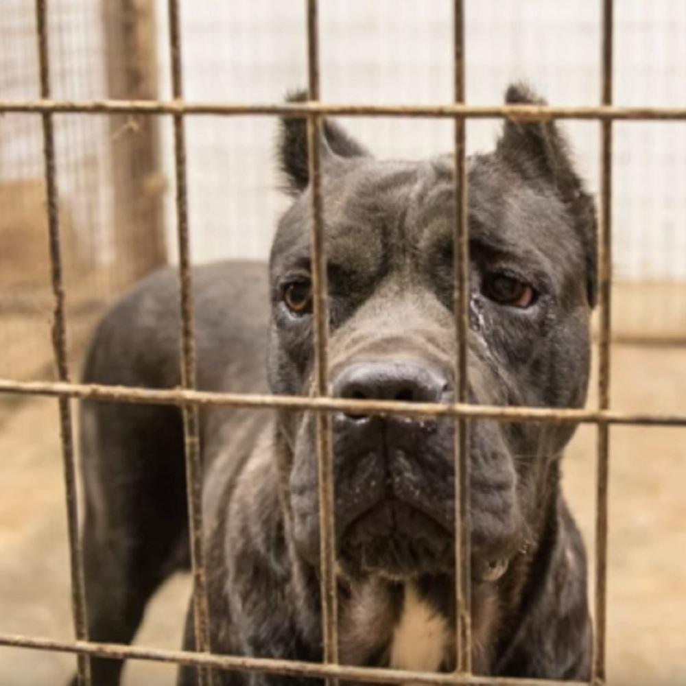 21 cani e del bestiame salvati da un allevamento in pessime condizioni
