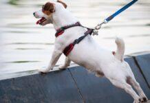 cane davanti a specchio d'acqua