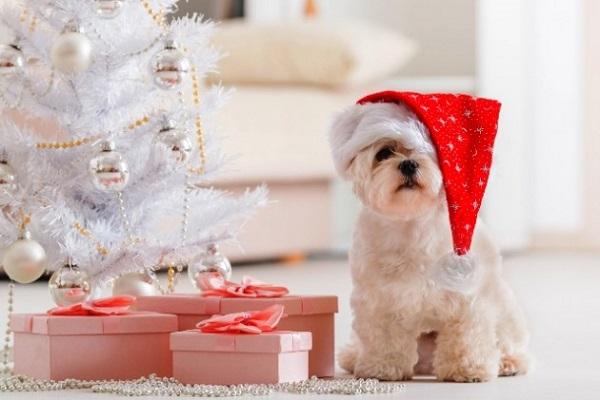 Problemi del cane a Natale: i pericoli che corre e come evitarli