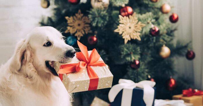 cane con regalo tra i denti