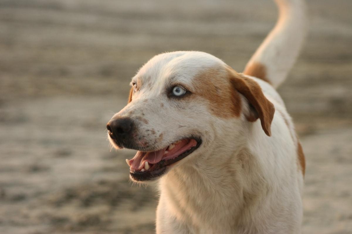 Prolasso vaginale del cane: tutto quello che bisogna sapere