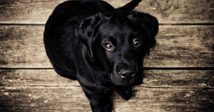 Il cane cerca approvazione? Sì, ed ecco cosa puoi fare
