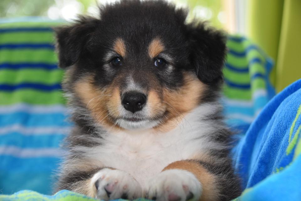 I cani hanno coscienza di loro stessi? Sanno cosa sono?