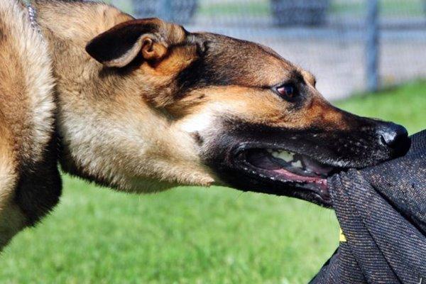 cane che morde le cose