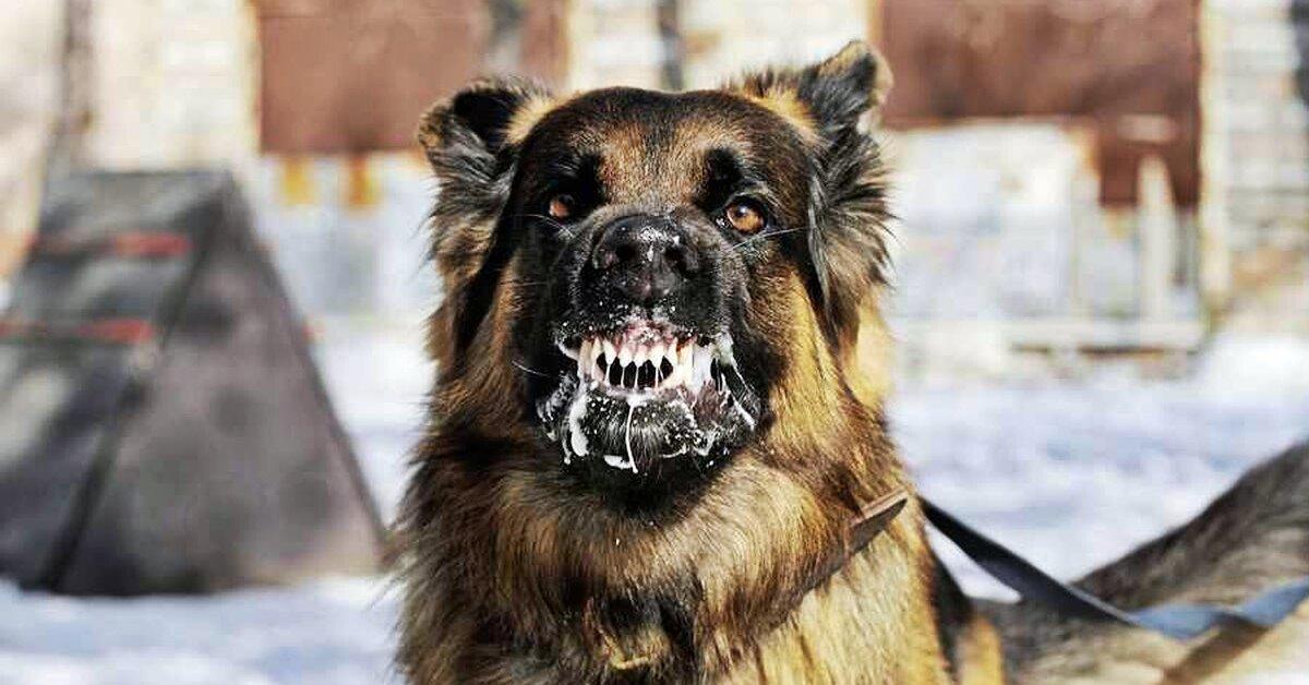 cane con la rabbia