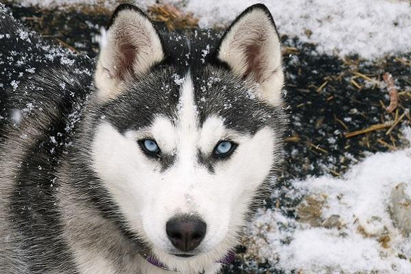 Le razze di cani che scavano più delle altre: ecco quali sono