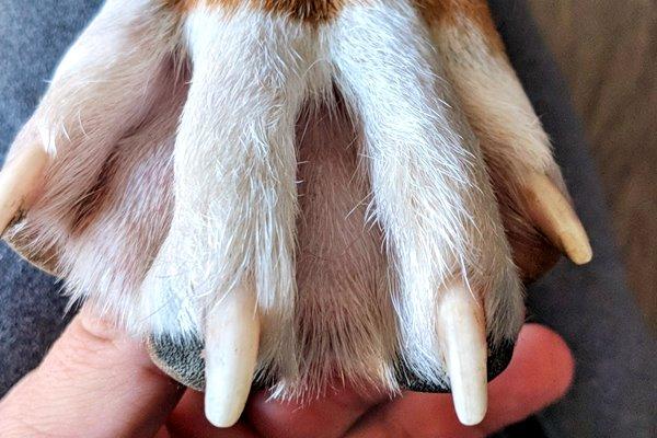 cane con le zampe palmate