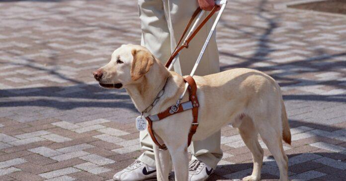 cane guida per disabile