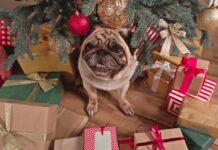 cane con regali di natale