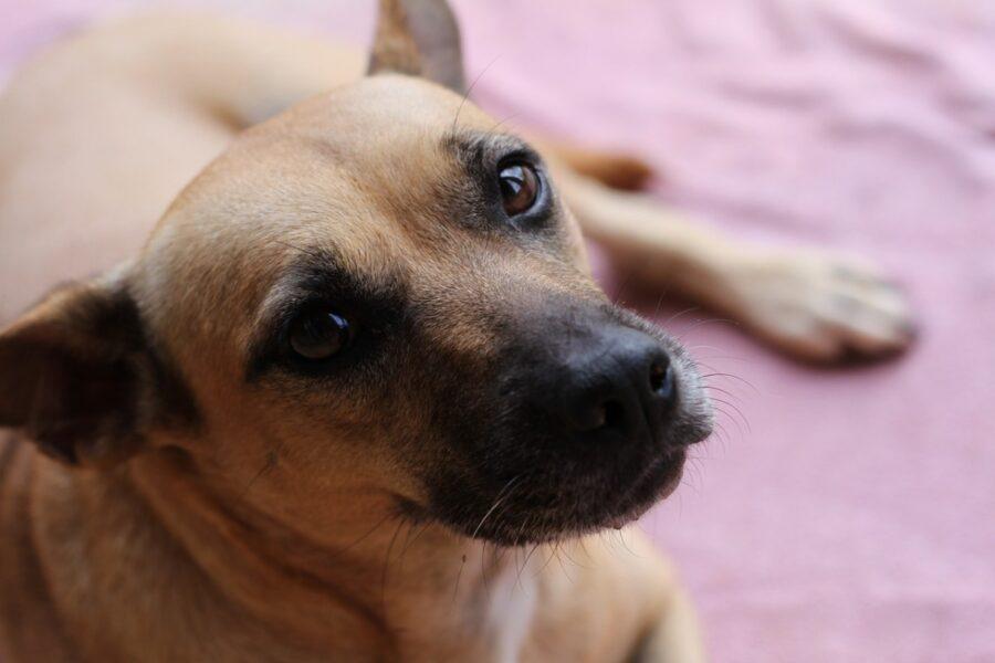 cane dallo sguardo tenero