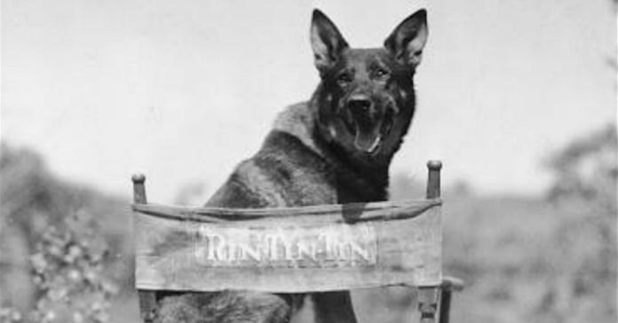 rin tin tin cane sul set