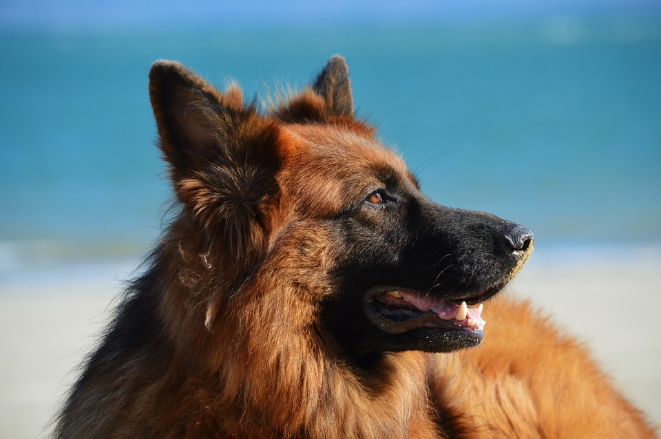 cane in estate ha caldo