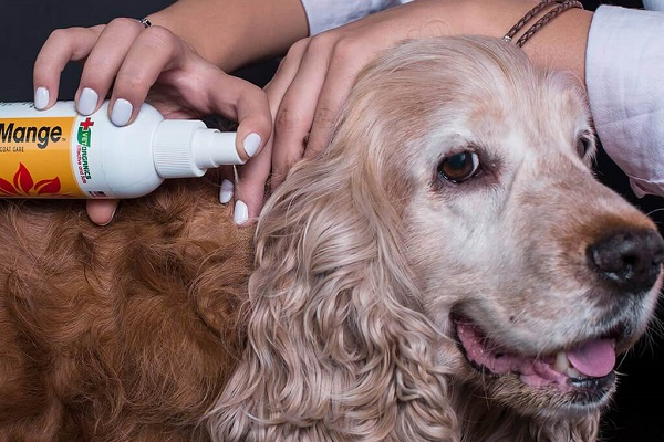 trattamento per la rogna nel cane