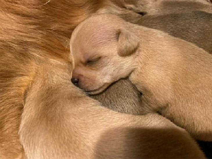 rosa-cuccioli
