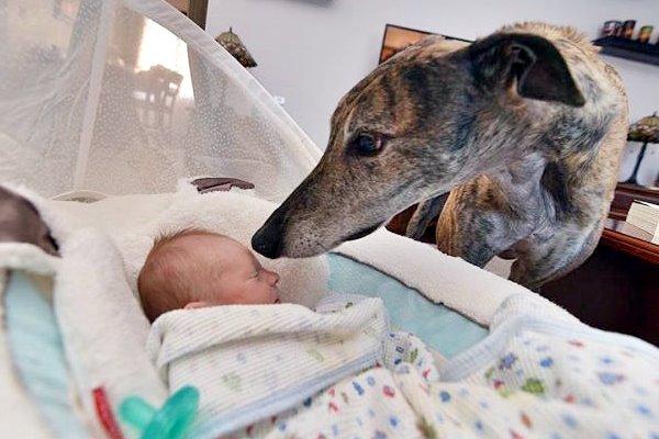 levriero con bambino