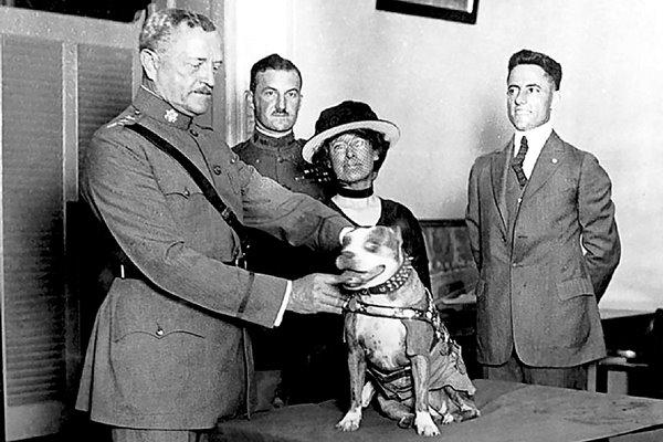 cane premiato