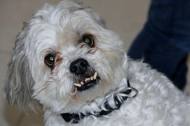 9 miti sull'aggressività del cane assolutamente da sfatare