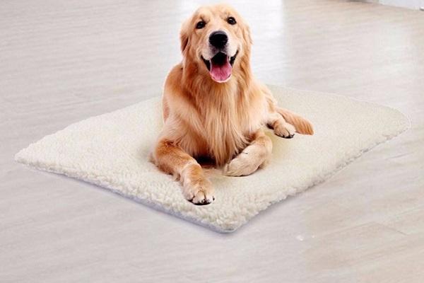 Tappetino autoriscaldante per cani: tutto il comfort per Fido
