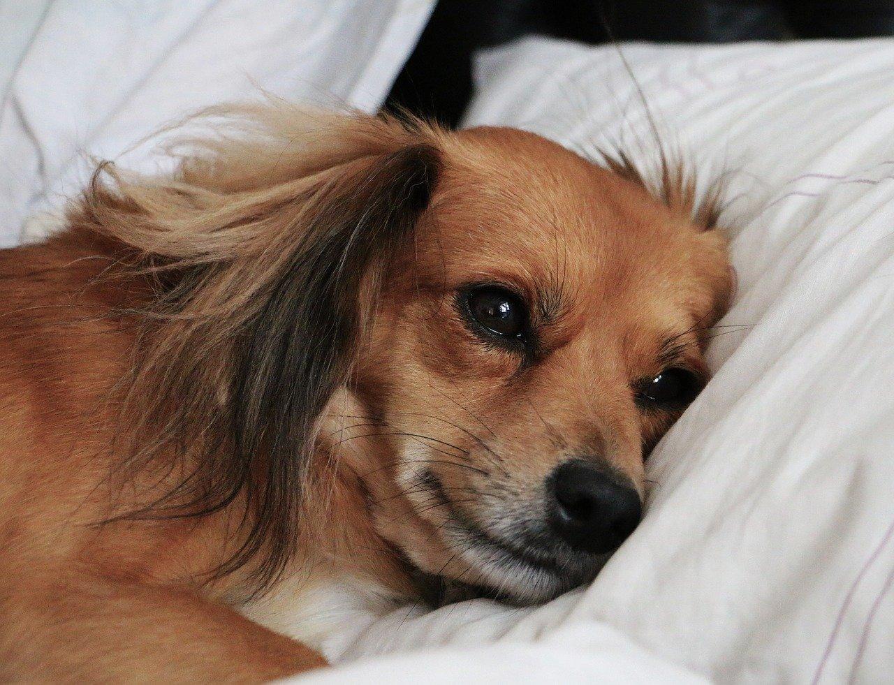 cane rilassato sul letto