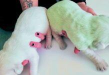 terni-il-cucciolo-incredibilmente-nasce-di-colore-verde