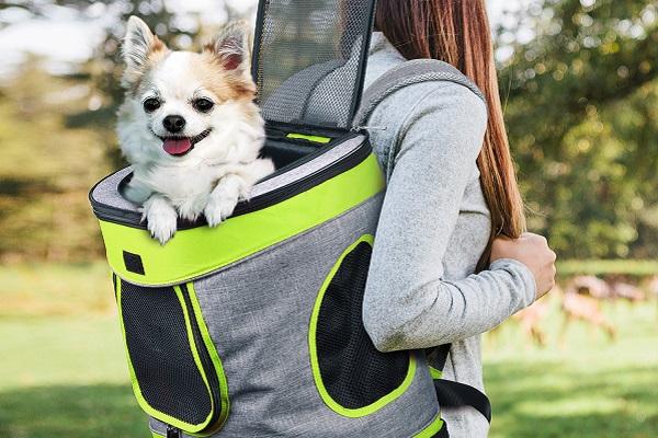 Zaino cupola per cani: un regalo speciale per il tuo quattro zampe