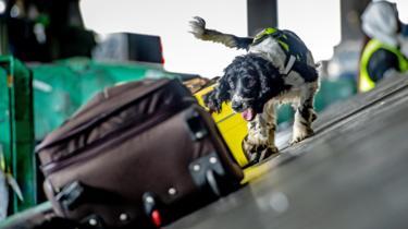 Cani contro contrabbando
