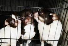 270-cani-salvati-dalla-polizia-spagnola-dopo-aver-vissuto-linferno-in-terra