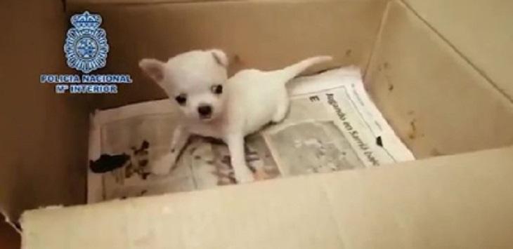 270-cuccioli-vendita-canili