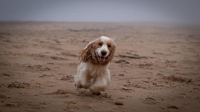 cane che gioca sulla sabbia