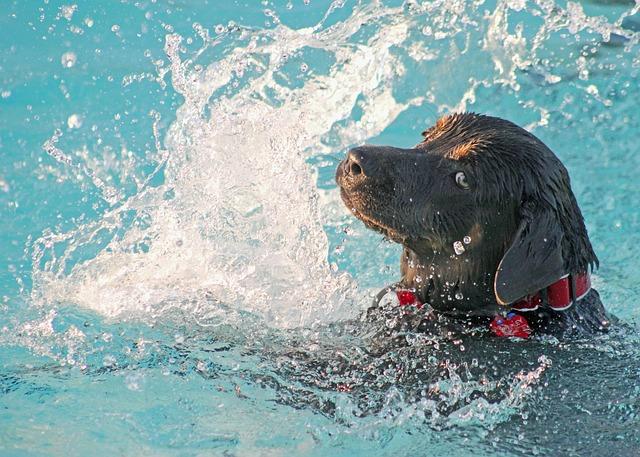 cane che gioca in cortile in piscina